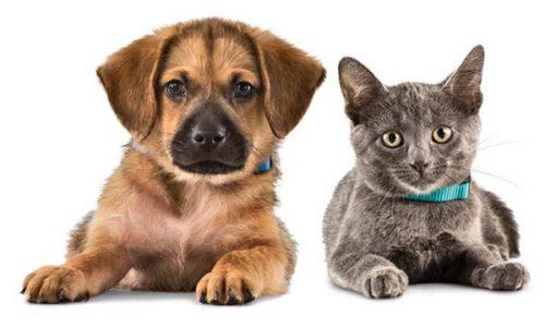 Investors, Should You Allow Pets in Your Rental Properties?